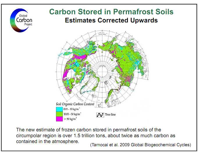 carbon in perfmafrost