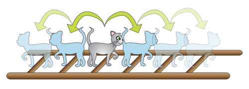 quantum ladder without dog